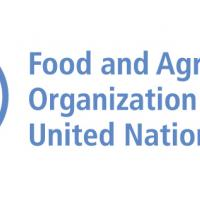 FAO © Nations Unies