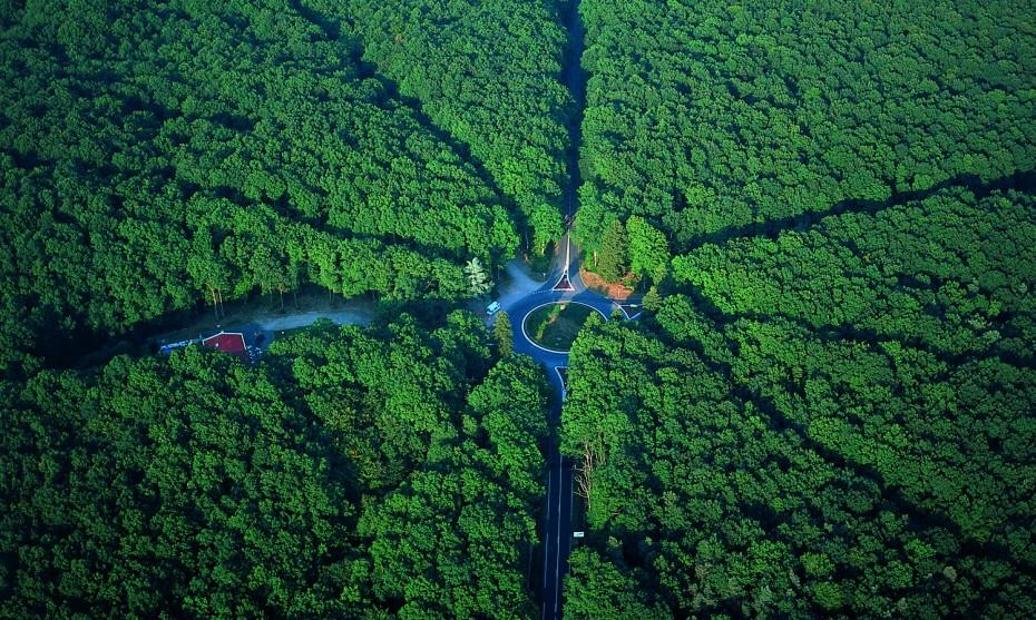 Vue aérienne de la forêt de Tronçais ©F.Lechenet
