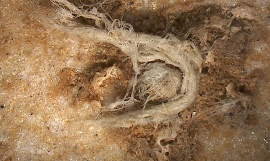 C2RMF / Muséum national d'histoire naturelle - Photographie du fragment de corde prise par microscopie numérique (le résidu mesure environ 6,2 mm de long et 0,5 mm de large)