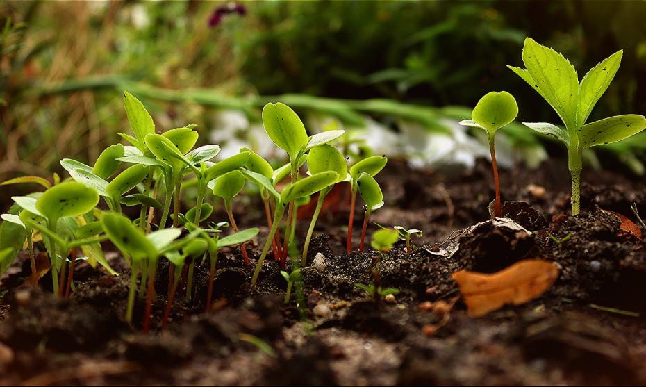 Illustration jeunes plantes @WhisperingJane_ASMR Pixabay