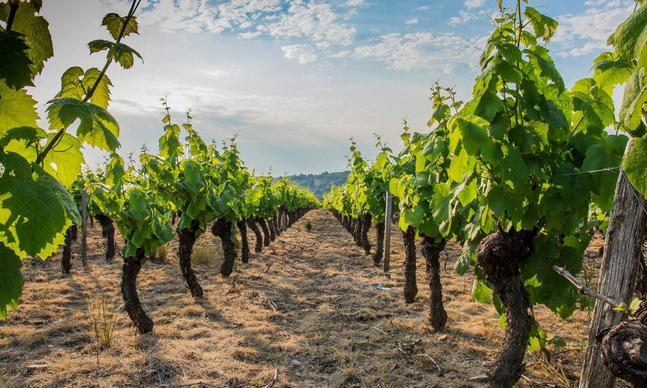 La consommation de vin en France est au plus bas